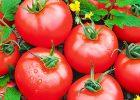VegetableGarden4