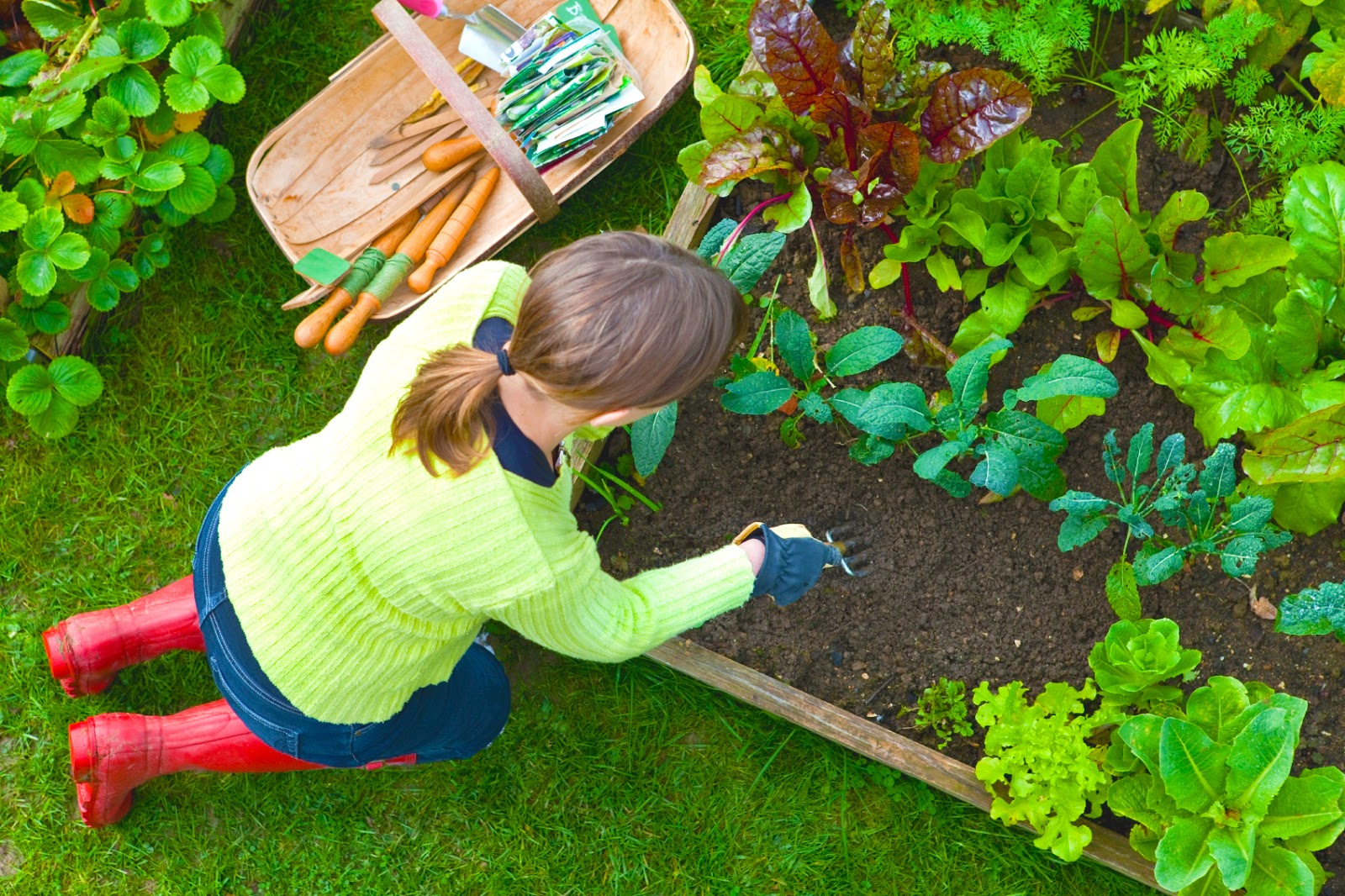 best-place-for-a-vegetable-garden-with-planning-a-small-vegetable-garden