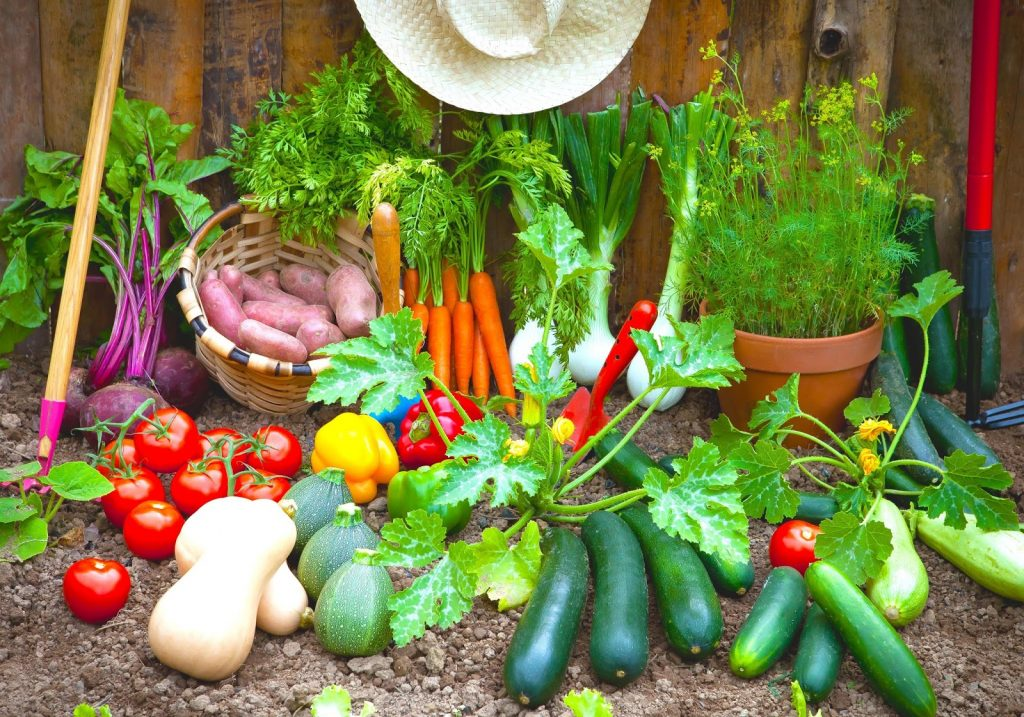 easy-vegetable-garden-plants-in-spring-vegetable-garden