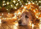 dog in christmas light installation for led christmas light bulbs