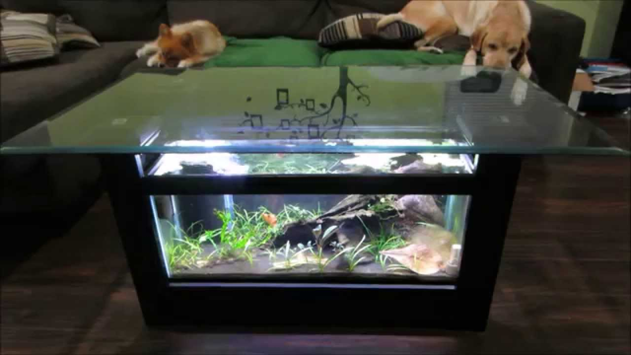 coffee table aquarium for sale 04