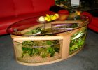 coffee table aquarium for sale 09