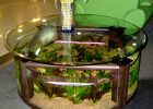 coffee table aquarium for sale 14