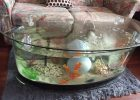 fish tank coffee table for sale 03
