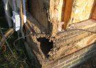 termite control termite treatment chemicals what chemical kills termites