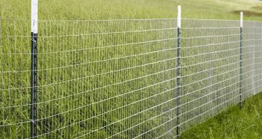 Inexpensive Dog Fence