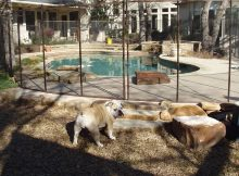 Cheap Easy Dog Fence for Sale
