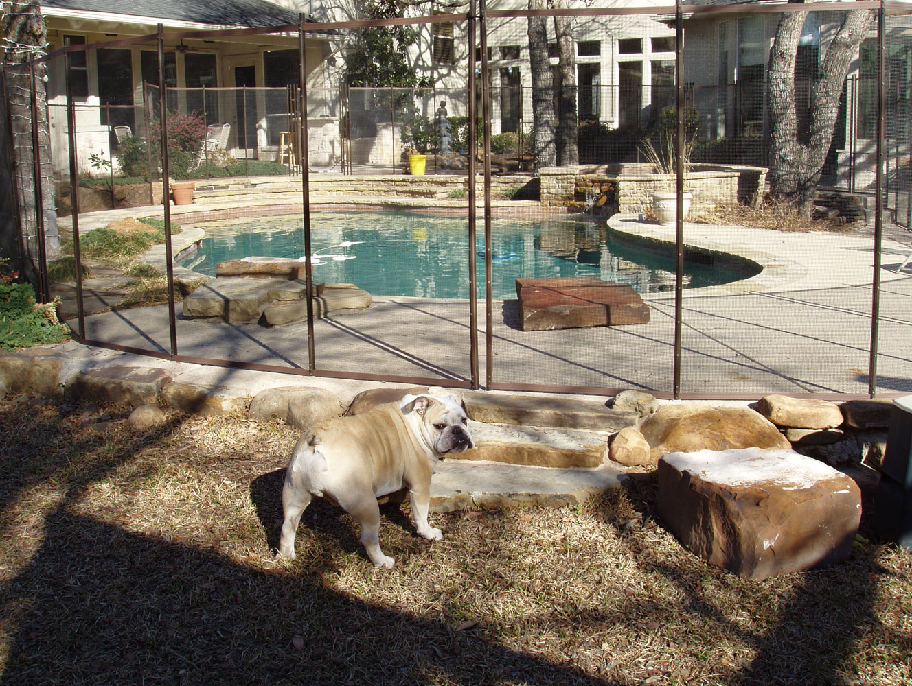 Dog Fence For Sale Cheap Cheap Easy Dog Fence With 3 Popular Dog Fence Options
