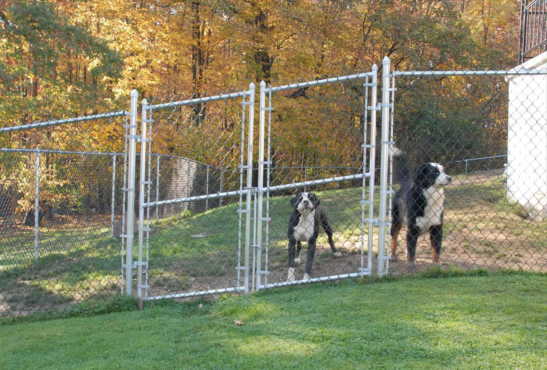 Cheap Fence Ideas For Dogs In DIY Reusable And Portable ...