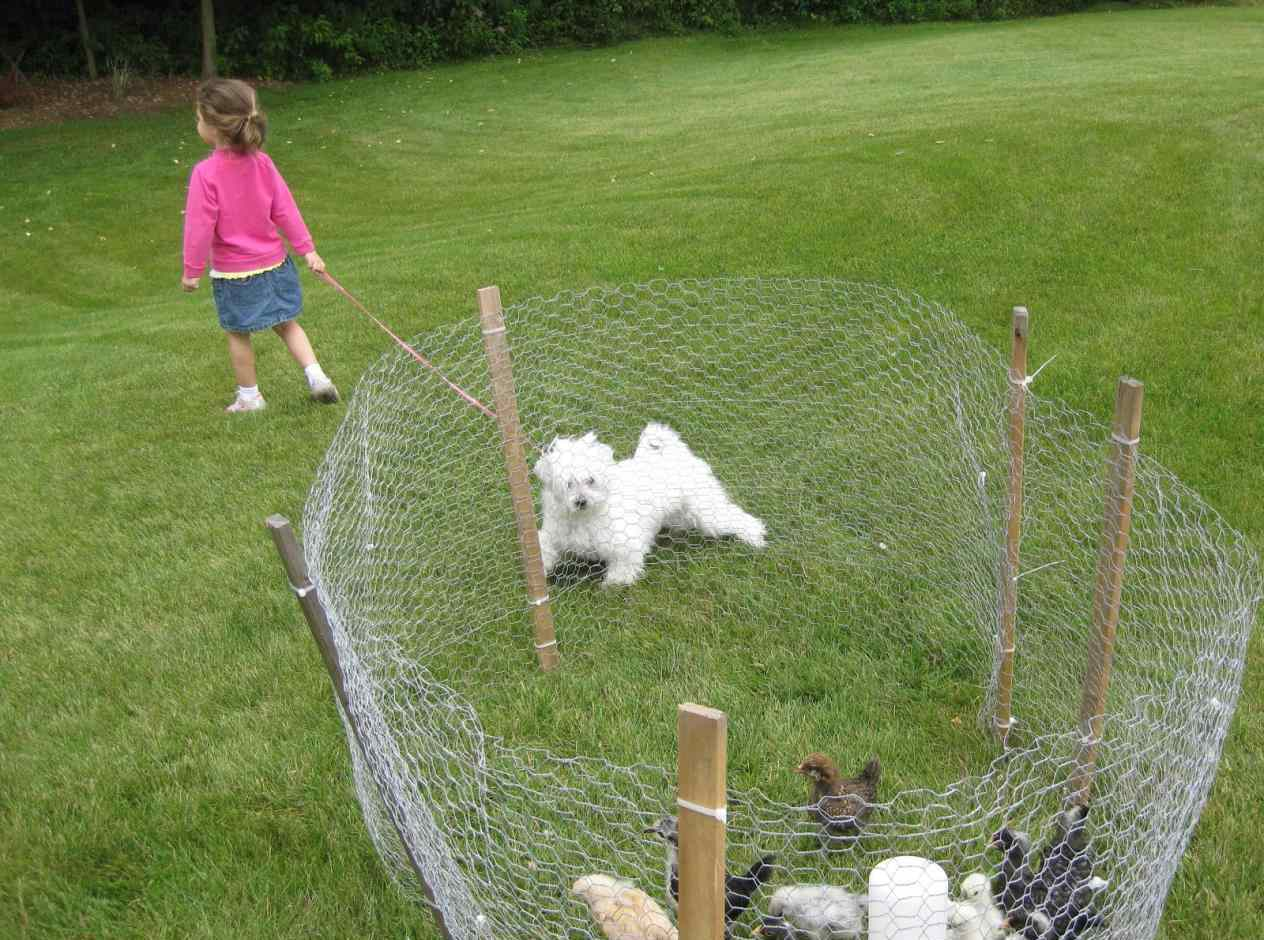 Cheap Fence Ideas For Dogs Run That Dig for Small Dogs