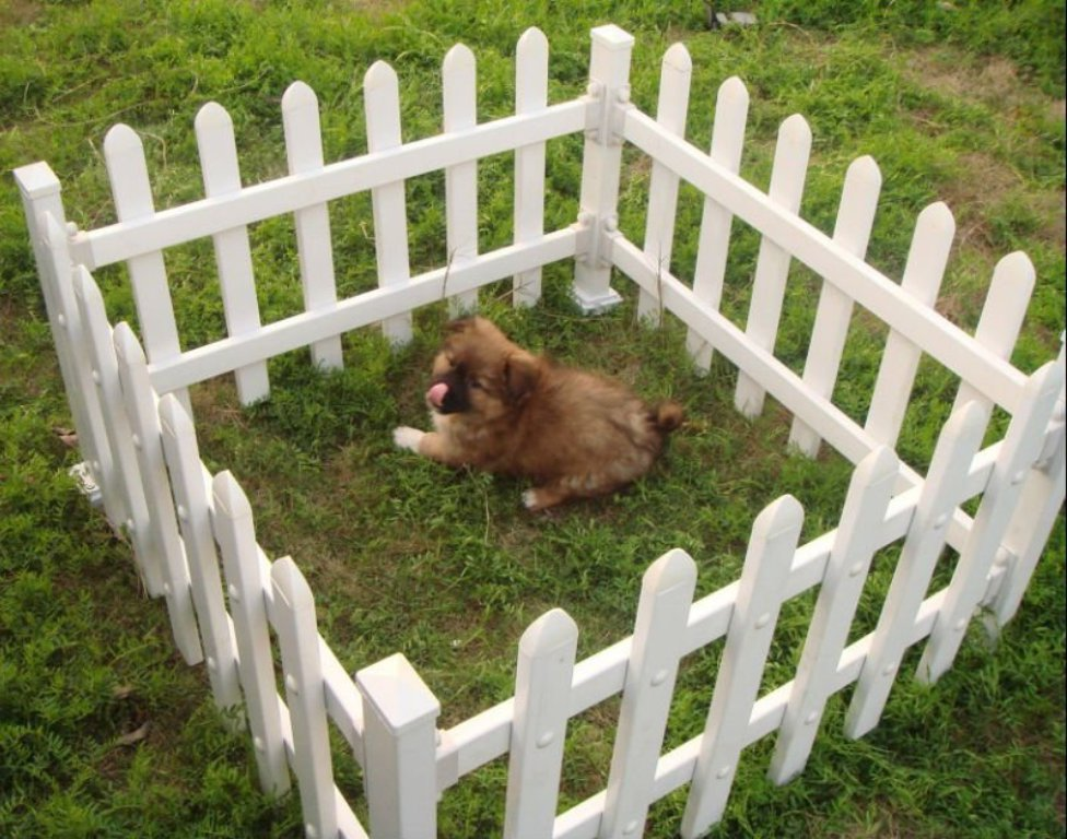 Cheap Fence Ideas For Dogs Run for Small Dogs