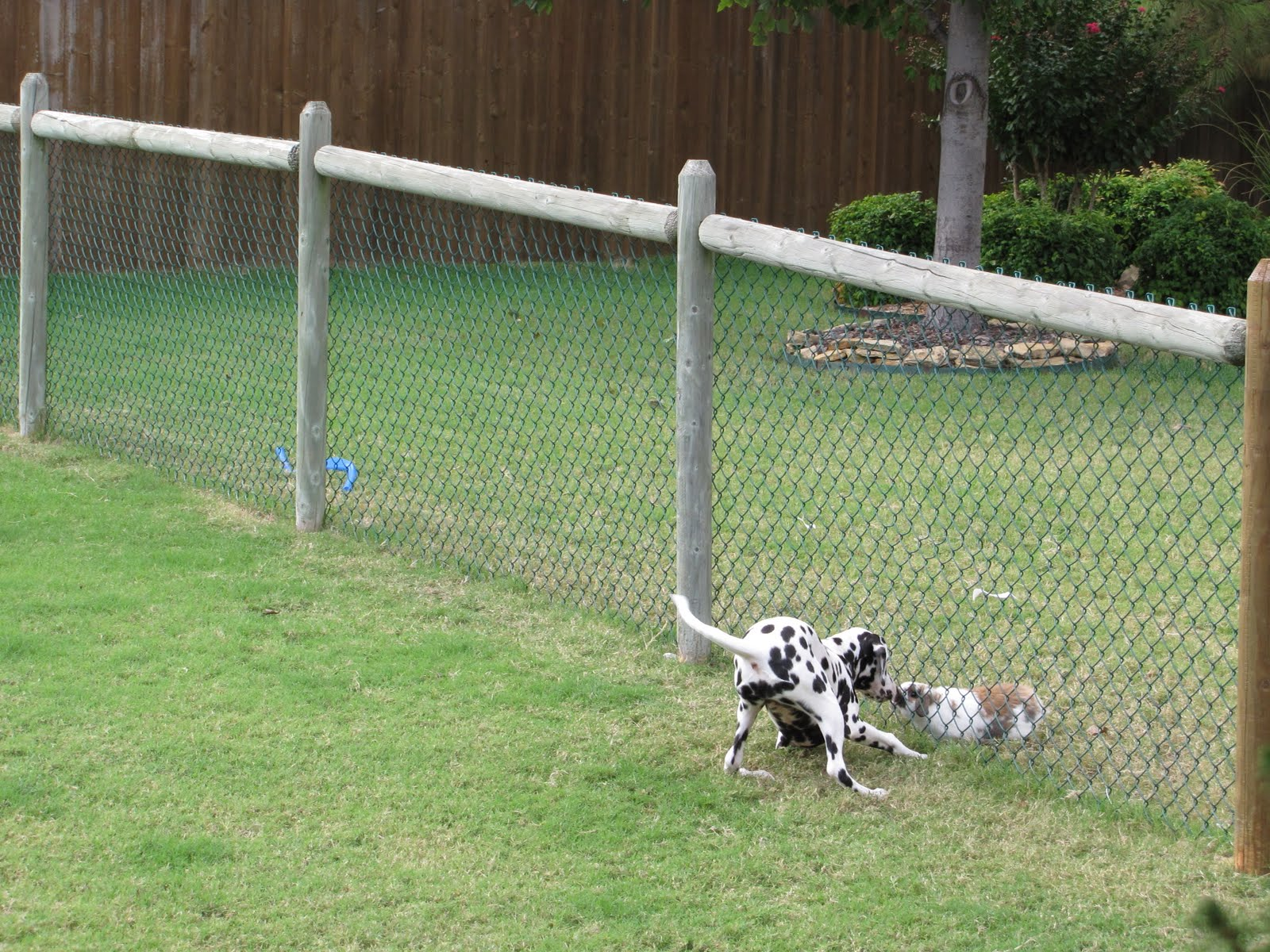 Dog Fences Outdoor Exercise