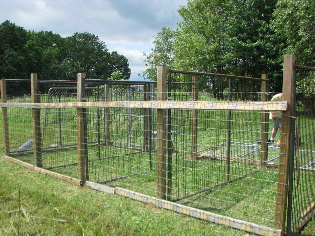 Dog Fences Outdoor Diy To Keep Your Dogs Secure Roy Home Design