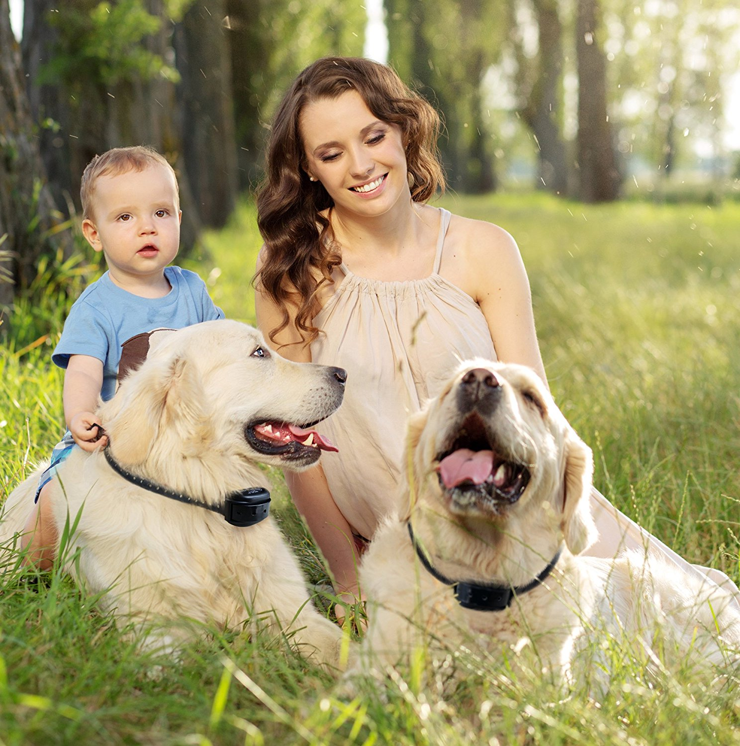 Shock Collar Fence For Dogs Wireless