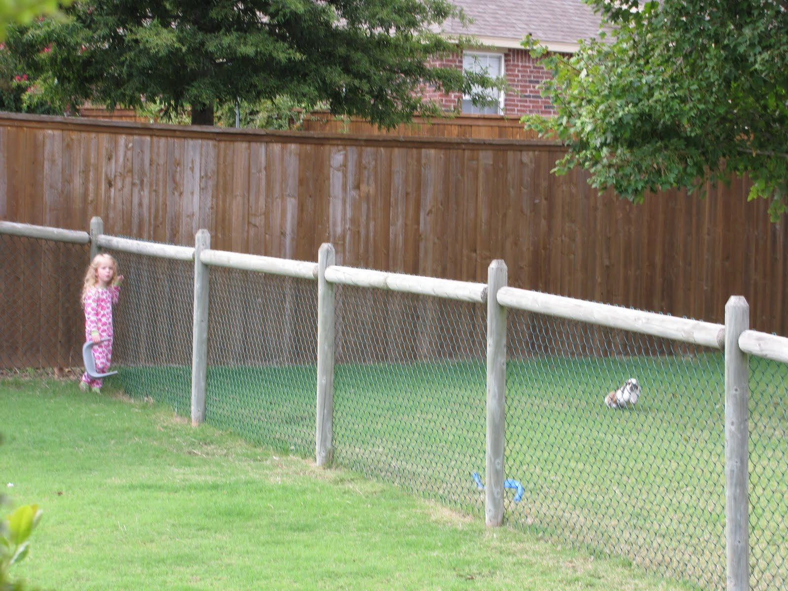 Outdoor Fence Ideas For Dogs - Wires & Decors