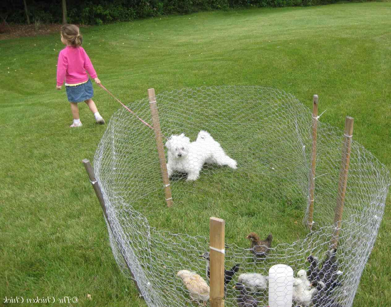 Temporary Dog Fence Ideas With 5 Type Easy Dog Fence Roy