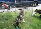Temporary Dog Fence Ideas Bunnings
