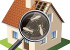 a termite inspection cost termite home inspection cost
