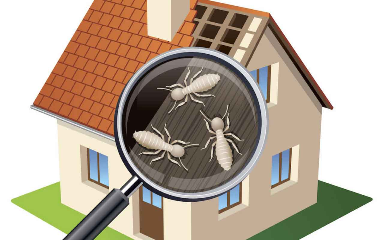 How Much Is A Termite Inspections Cost? A Guideline For Termite Treatment | Roy Home Design