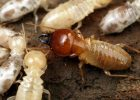 how much do termite inspections cost cost of termite inspections