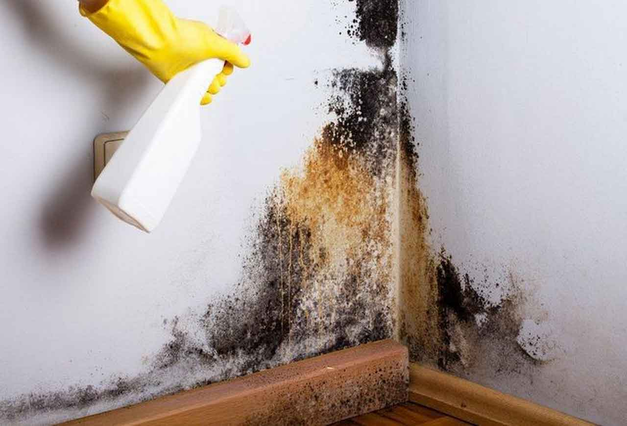 Pest And Mildew Prevention And How To Control It | Roy Home Design