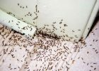pest control ants pest control hiring pest control tips pest control for residential