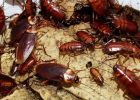 pest control bed bugs pest control inspection how to get rid of roaches