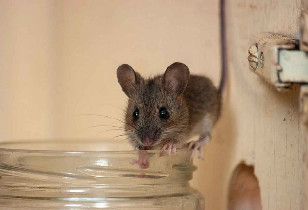 Pest And Mildew Prevention And How To Control It   Roy Home Design